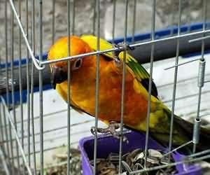 笼养观赏鸟:健康洗澡好快乐!